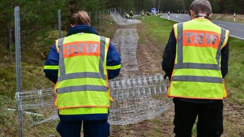 Durch einen festen Zaun sollen verhindert werden, dass Wildschwein von Polen nach Deutschland einwandern können. Er ist ein Meter hoch. Der Zaun wird entlang der Neiße gezogen. Foto: dpa